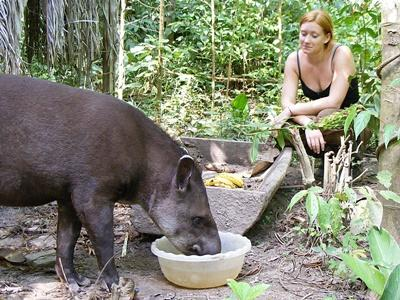 A Projects Abroad volunteer helps feed a rehabilitated wild animal at the Conservation Project in Peru.