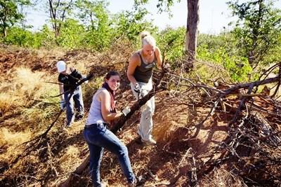 Projects Abroad volunteers work together to remove tree branches at the Conservation Project in Botswana, southern Africa.