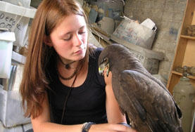 A Veterinary Medicine and Animal Care intern abroad cares for a rehabilitated bird of prey in Africa.