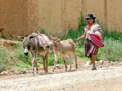 A Bolivian woman walks alongside a pair of donkeys on a dusty road in Cochabamba.