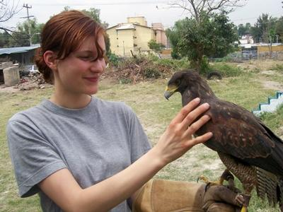 A vet interacts with a falcon being rehabilitated at our Falconry Project in Mexico.