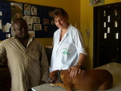 Veterinary Medicine Internships in Ghana allow you to shadow and work alongside local vets in a developing country.