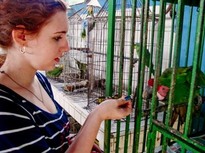 Volunteer Animal Care in Mexico with Projects Abroad