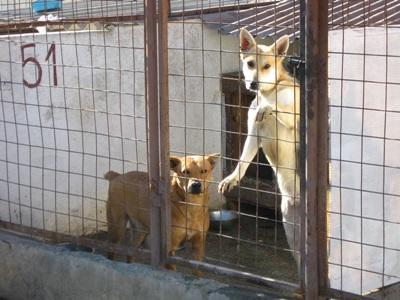 Sick dogs are treated and cared for on the Animal Care Project in Romania