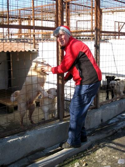 A volunteer works with dogs on the Animal Care Project in Romania