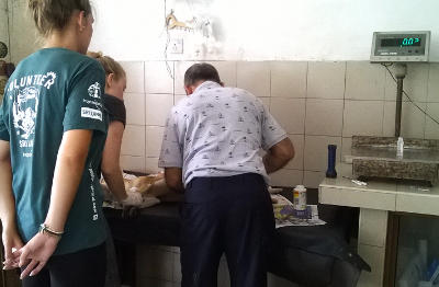 Projects Abroad Veterinary Medicine interns observe a Sri Lankan vet as he treats an injured dog at an animal clinic.